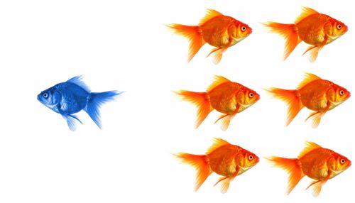7 ways to stand out during peak hiring season